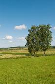 Paysage rural avec deux arbres — Photo
