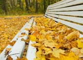 Autumn leaves on the bench — Stock Photo