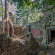 Ta Prohm Temple, Angkor, Cambodia - Stock Photo
