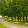 Green alley — Stock Photo #17150205