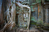 Ta Prohm Temple, Angkor, Cambodia — Stock Photo