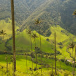 Vax palm trees of Cocora Valley, colombia - Stock Photo