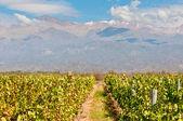 Vineyards of Mendoza, Argentina — Stock Photo