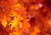 Las hojas de otoño, enfoque muy superficial — Foto de Stock