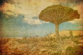 Vintage image of Dragon trees at Dixam plateau, Socotra Island, — Stock Photo