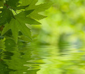Green leaves reflecting in the water, shallow focus — Stock Photo