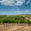 Vineyard in Chianti, Tuscany — Stock Photo #17420059