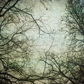 Grunge frame with tree silhouettes — Stock Photo