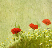 Grunge floral background with poppies — Stock Photo
