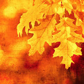 Grunge background with autumn leaves — Stock Photo