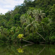 River in tropical rainforest — Stock Photo