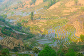 Rice terraces of yuanyang, yunnan, china — Stock Photo