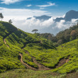 Tea plantations in Munnar, Kerala, India - Stockfoto