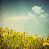 Vintage image of dandelion fiel — Stock Photo