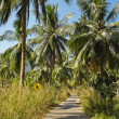 Palm road — Stock Photo