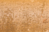Egyptian hieroglyphics from saqqarah, cairo — Stock Photo