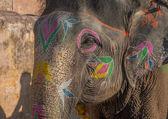 在斋浦尔,拉贾斯坦邦,印度彩色大象 — 图库照片