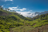 Tea plantations in Munnar, Kerala, India — Stock Photo
