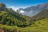 Tea plantations in Munnar, Kerala, India — Stock Photo