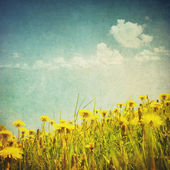 Vintage image of dandelion fiel — Stock Photo