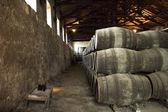 Port barrels in vineyard — Stock Photo