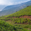 Stock Photo: Teplantations in Munnar, Kerala, India
