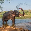Stock Photo: Elephant bathing, Kerala, India