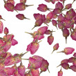 Stock Photo: Background of rose buds