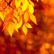 Autumn leaves, very shallow focus — Stock Photo