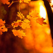 Autumn leaves, very shallow focus — Foto Stock