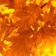 Autumn leaves, very shallow focus — Stock Photo #30865507
