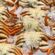 Fresh crabs in the market — Stock Photo