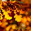 Autumn leaves, very shallow focus — Stock Photo #30865719