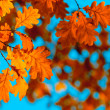 Autumn leaves, very shallow focus — Stock Photo #30865739