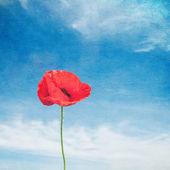 Vintage image of poppy — Stock Photo