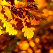 Autumn leaves, very shallow focus — Stock Photo #31952001