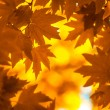 Autumn leaves, very shallow focus — Stock Photo #31952207