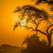 Stock Photo: Africsunset in savannah