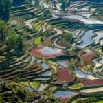 Rice terraces of Yuanyang, Yunnan, China — Stock Photo #32083385