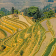 Rice terraces of Yuanyang — Stock Photo