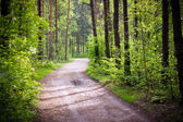 Green forest - nature — Stock Photo