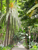 Avenue lined in tropical plants in a Malaga park — Stock Photo