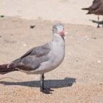 Seagulls — Stock Photo #13169396