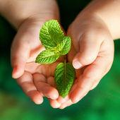 Baby handen met groene plant. — Stockfoto