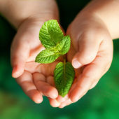 Infant hands holding green plant. — Stock Photo