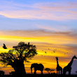 African safari scene at sunset. - Stock Photo