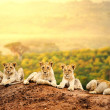 Stock Photo: Lion cubs waiting together.