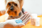 Vet with dog pills. — Stock Photo