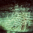 Old Fish Skin — Stock Photo