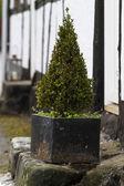 Planta — Foto de Stock